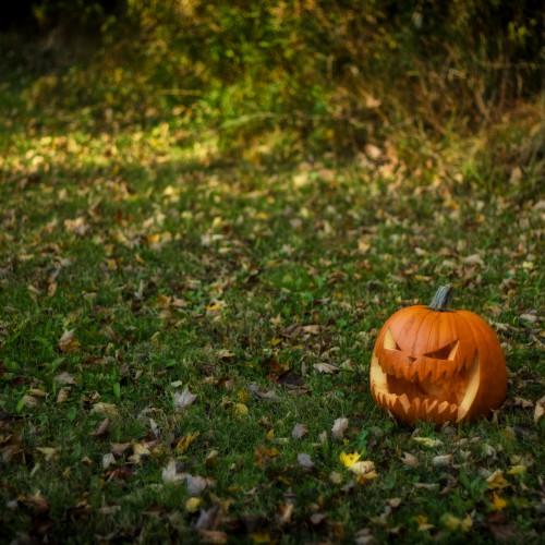 autumns-eyes-jack-5